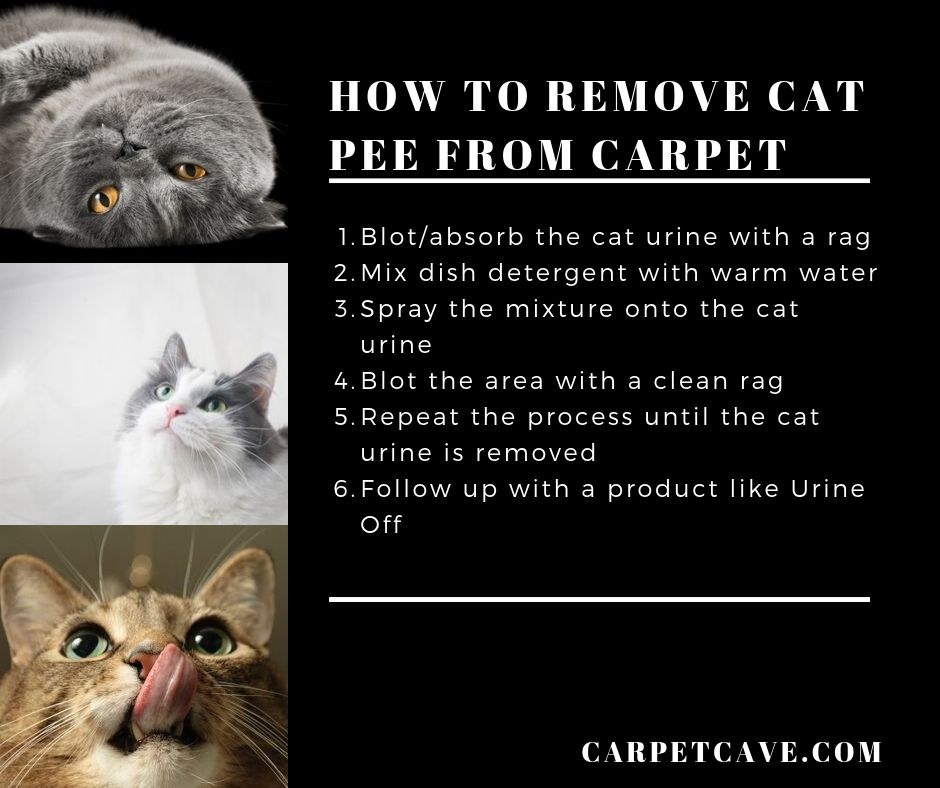 Infographic on how to remove cat pee from carpet